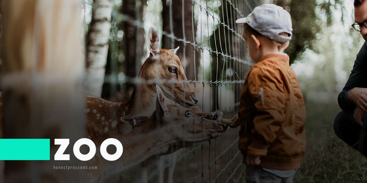 Pros and Cons of Zoo