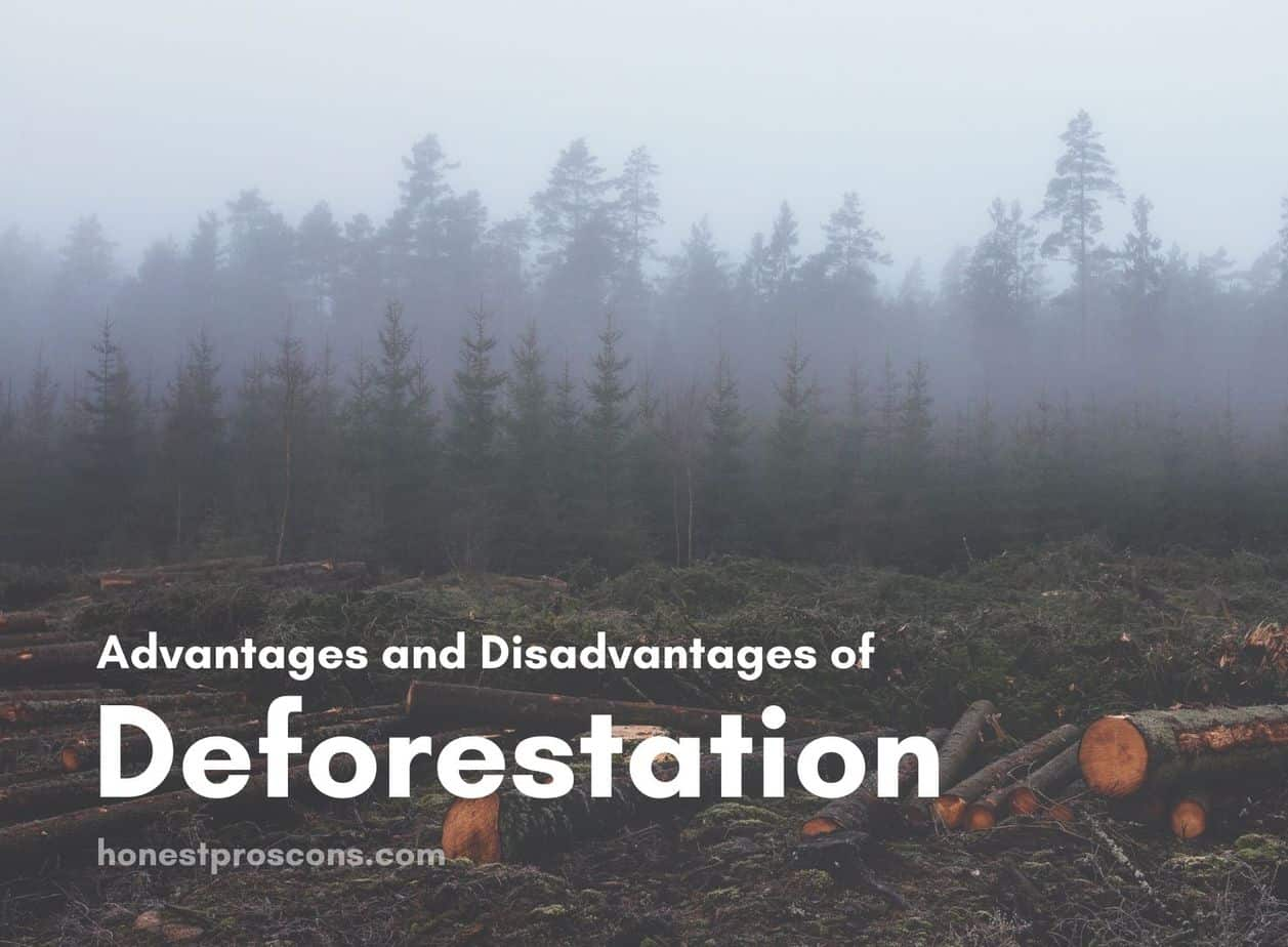 Advantages and Disadvantages of Deforestation